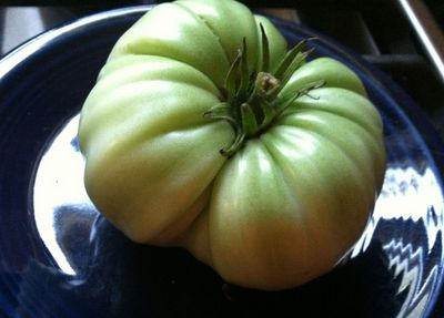 Green Tomato.jpg